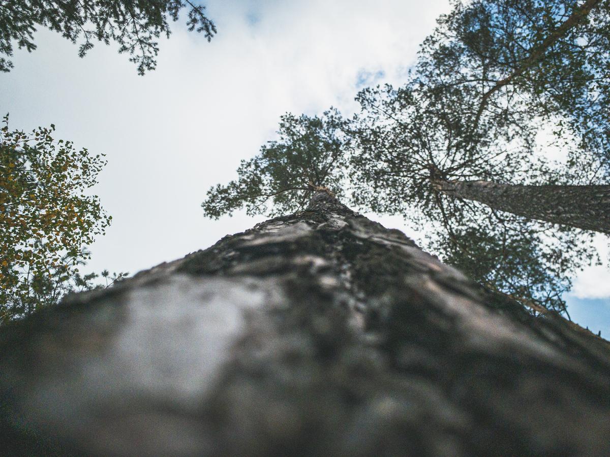 Vyzkoušejte focení z mravenčí perspektivy - strom
