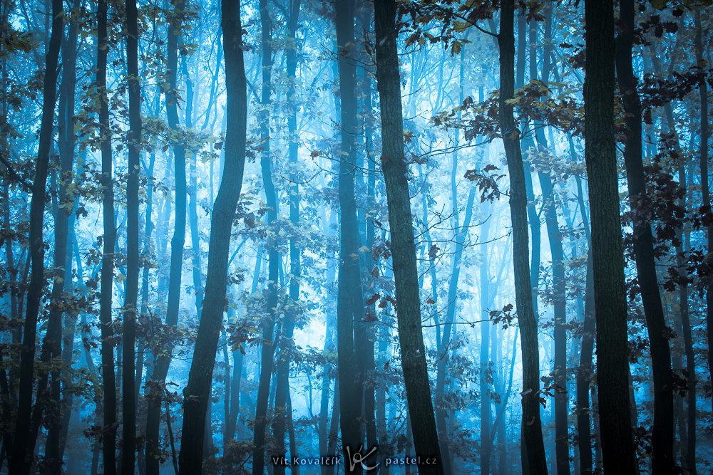 Jak v mlze nafotit detaily krajiny - stromy s listím v mlze