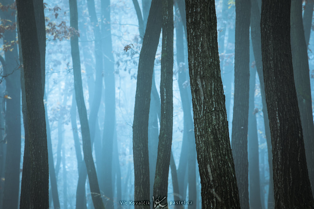 Jak v mlze nafotit detaily krajiny - stromy bez listí v mlze