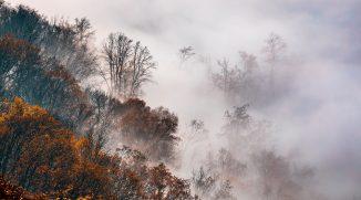 Jak v mlze nafotit detaily krajiny