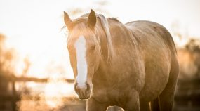 Jak fotit koně? Vykoupat, uši dopředu a pohlídat kompozici