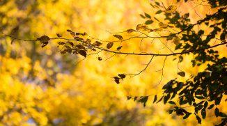 Focení v přírodě: čeho si všímat