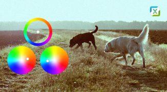 VIDEO: Praktický návod k barevnému tónování