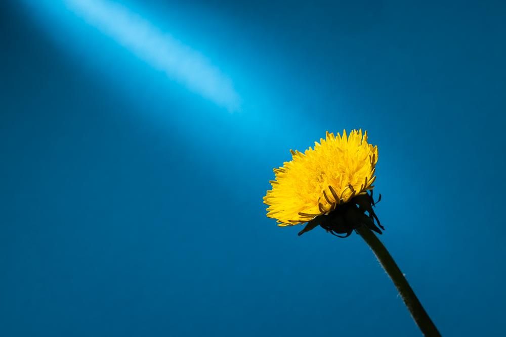 Jak fotit květiny doma
