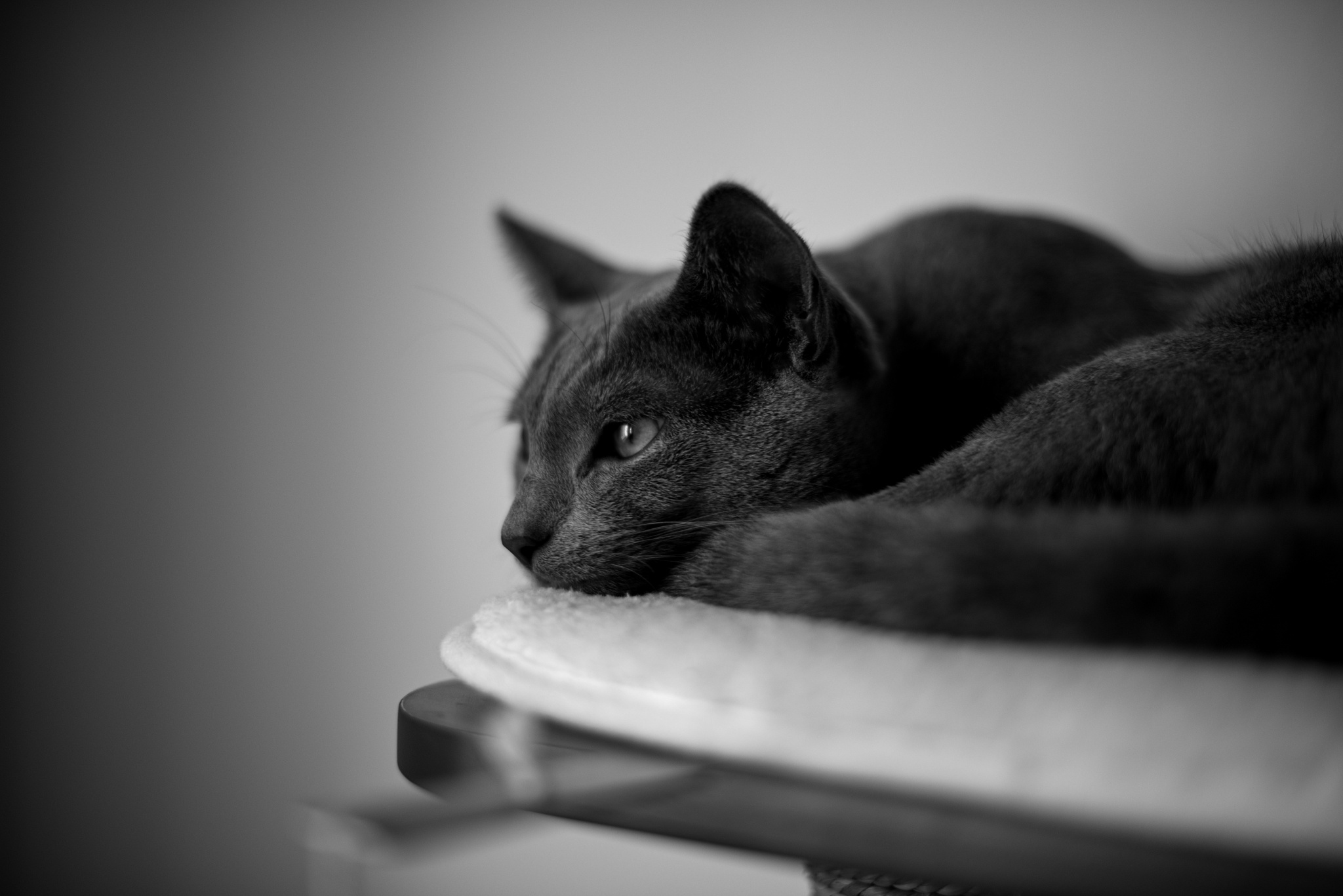 Tipy, jak upravit fotky vašich kočičích mazlíčků