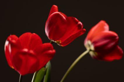 Jak fotit květiny v domácích podmínkách