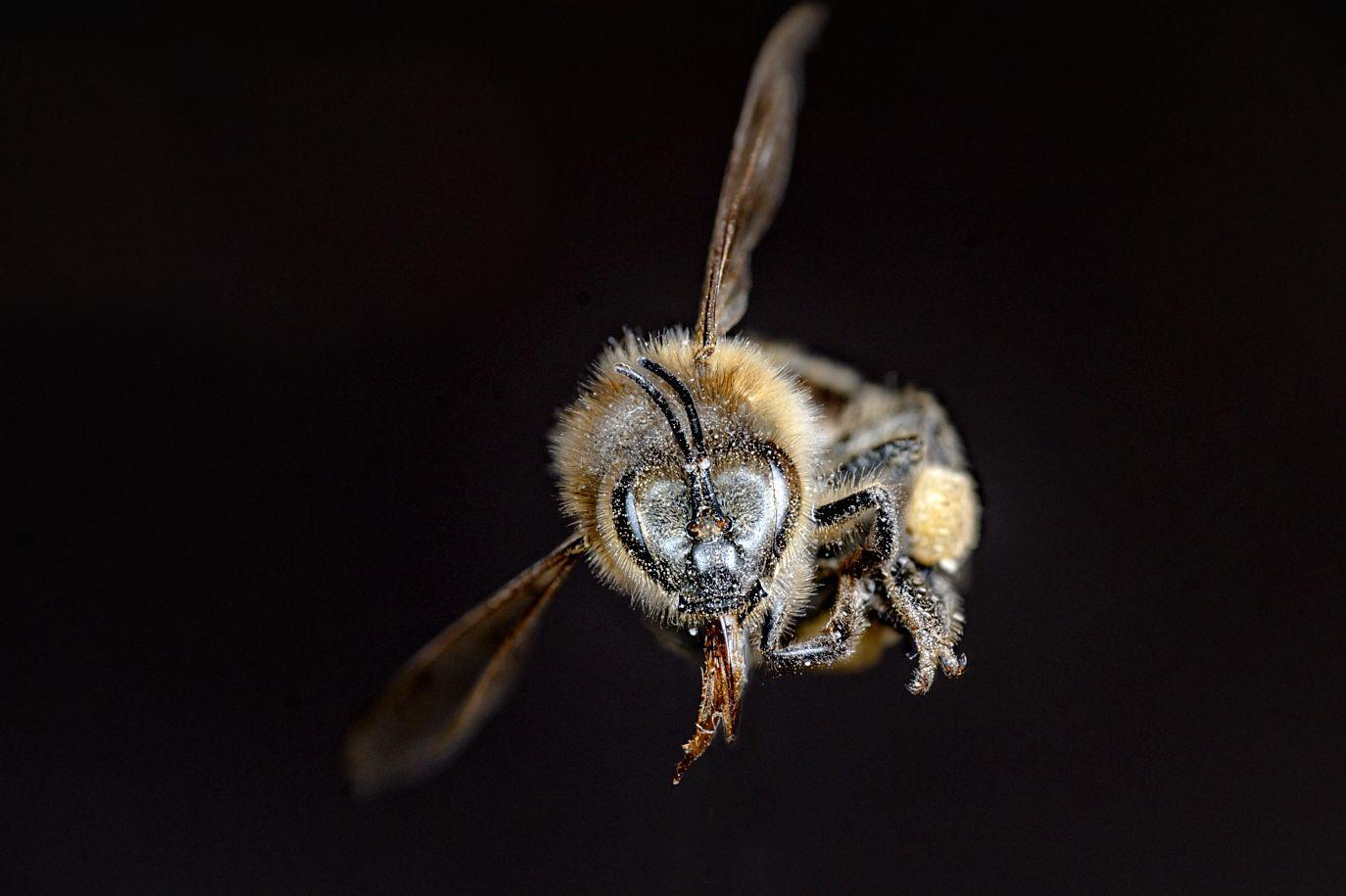 Příslušenství k makrofotografii, včela
