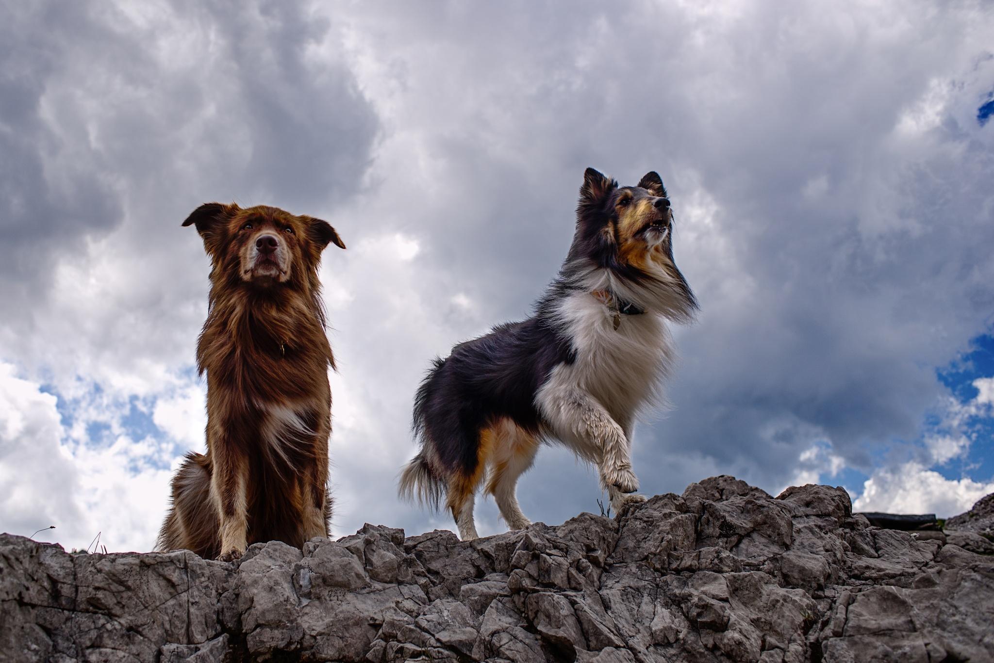 Focení psů není vždy jednoduché, shodují se Míša Malá a Eliška Hrůzová