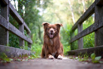 Lákání na zvuky a válení se po zemi. Focení psů není vždy jednoduché, říkají Míša Malá a Eliška Hrůzová